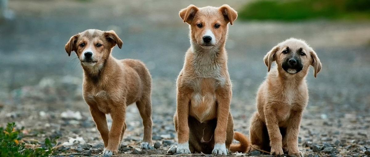 Gelenke Hunde
