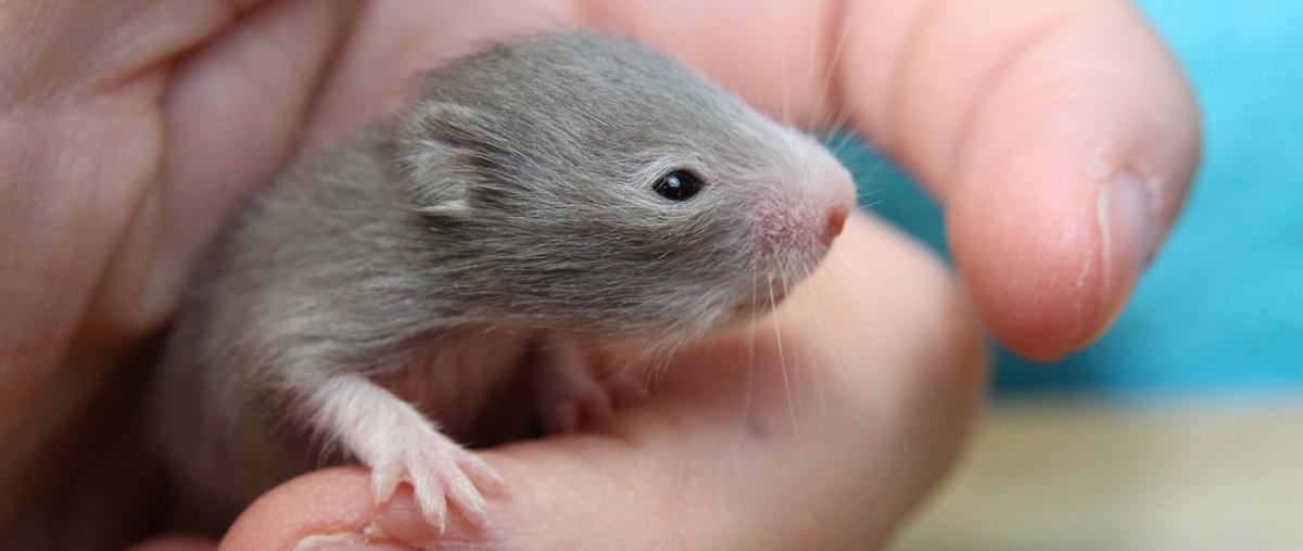 Hamsterkäfig Vergleich