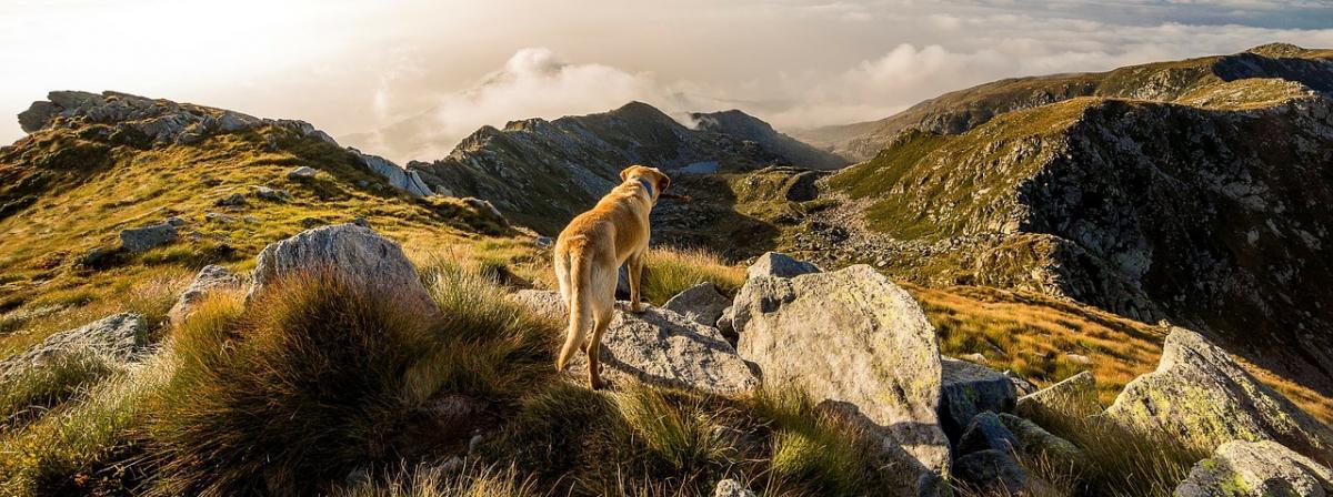 Hund Laufgeschirr Ratgeber