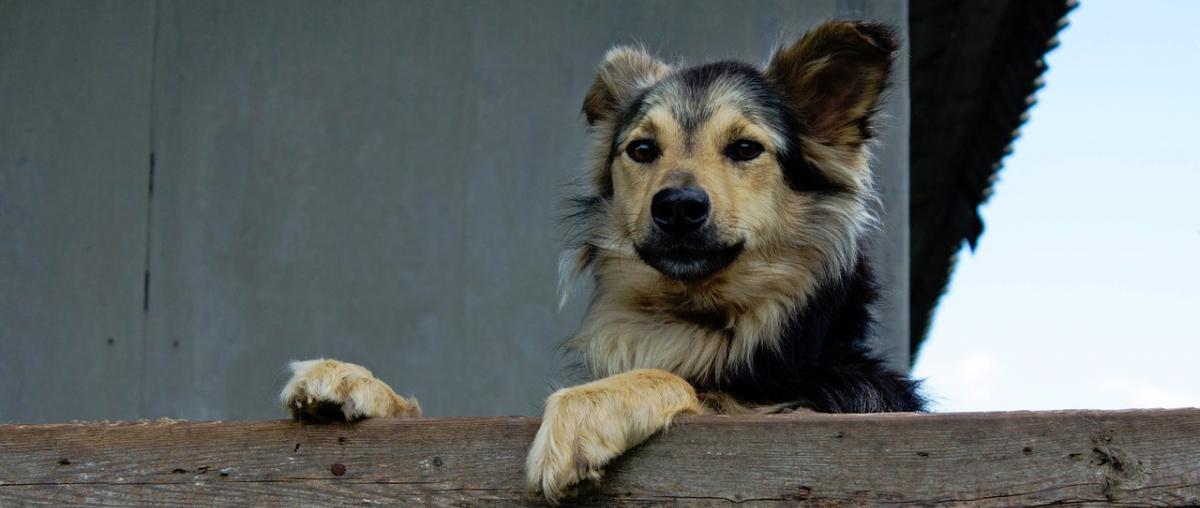 Hund Sicherheitsgeschirr Vergleich
