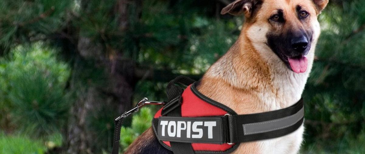Hunde Brustgeschirr Vergleich