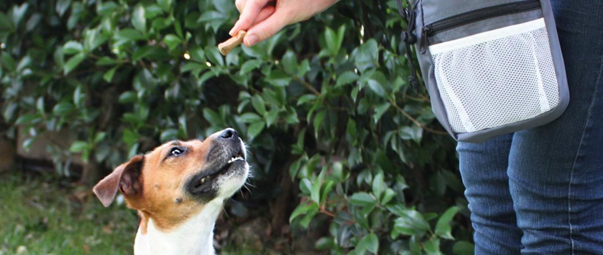 Hunde Futterbeutel Ratgeber