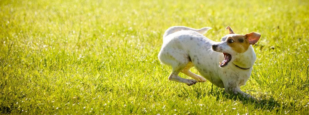 Hunde Geruchsentferner