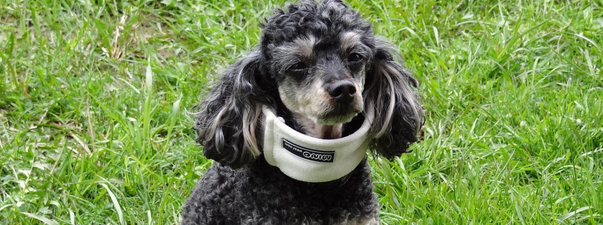 Hunde Halskrause Vergleich