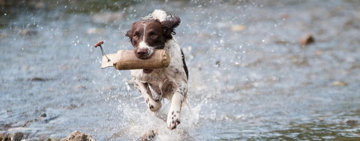 Hunde Juckreizmittel im Vergleich