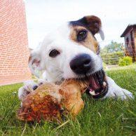 Hunde Kauspielzeug Bestseller