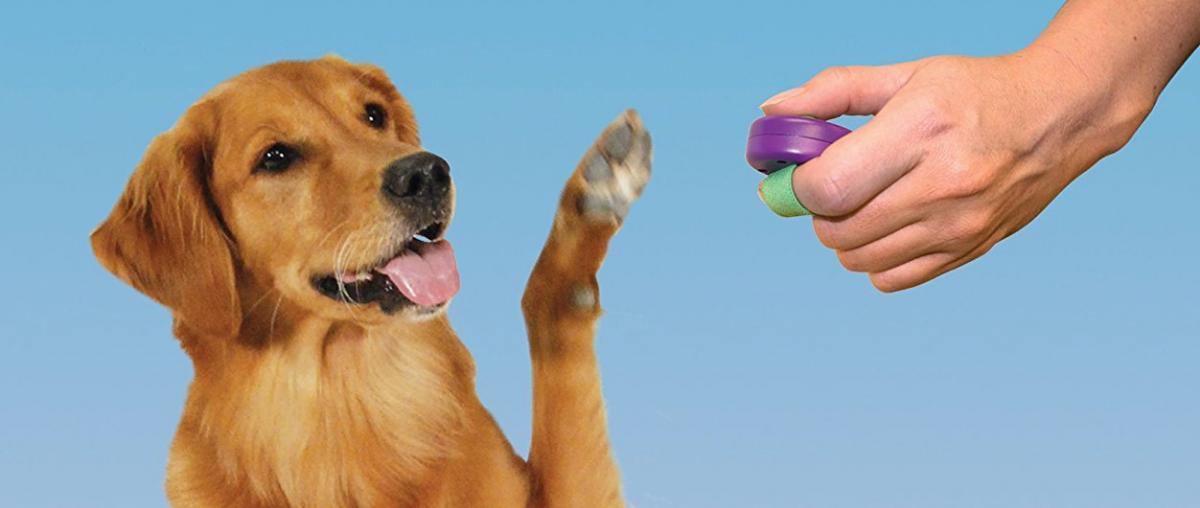 Hunde Klicker Ratgeber