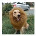 Hunde Kostüm Bestseller