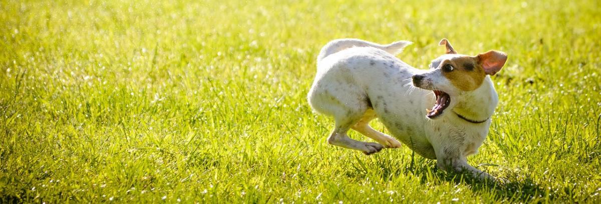 Hunde Laufstall Vergleich