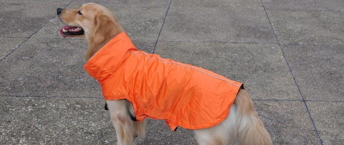 Hunde Regenjacke Ratgeber