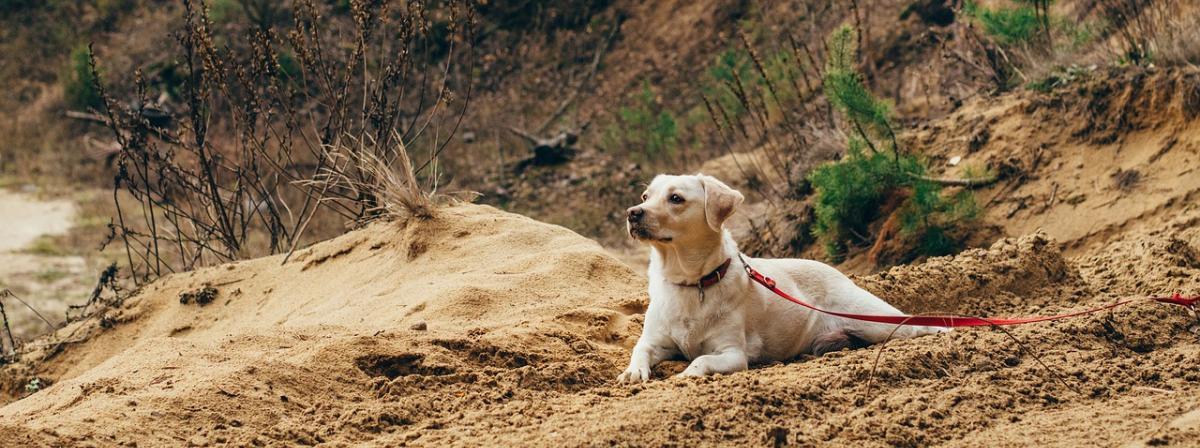 Hunde-Schleppleine Ratgeber