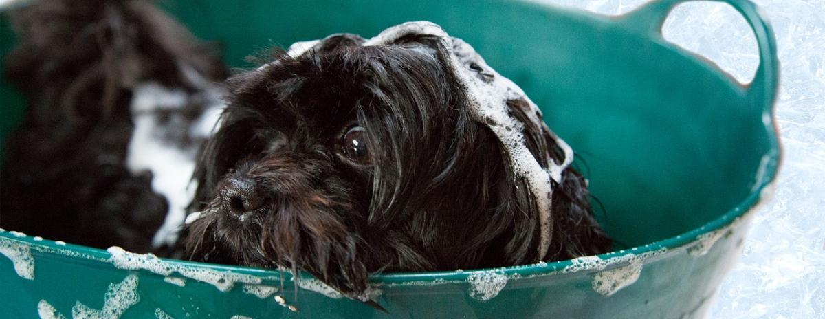 Hunde Shampoo Vergleich