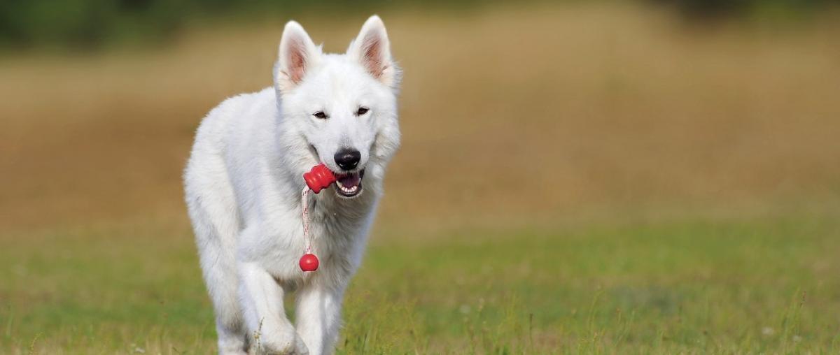 Hunde Strategiespiel Ratgeber