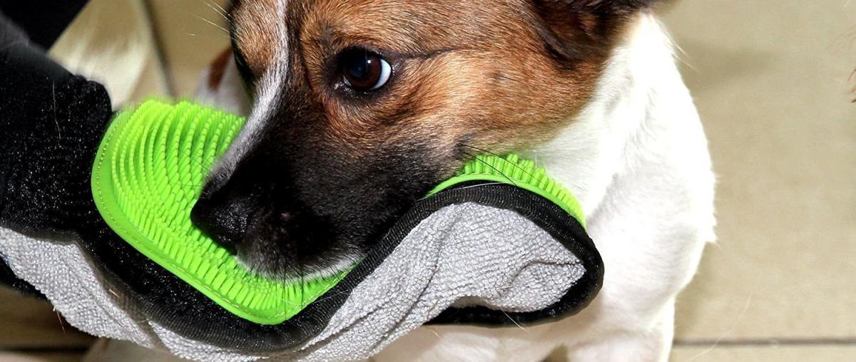 Hunde Striegel Ratgeber