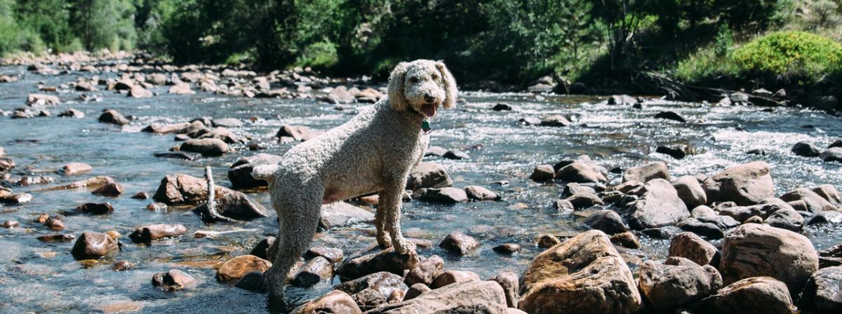 Hunde Trinkbrunnen Ratgeber