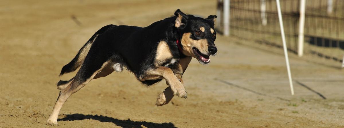 Hunde Ungezieferschutz Vergleich