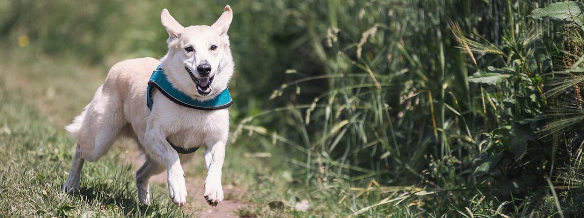 Hunde Zeckenhalsband Vergleich