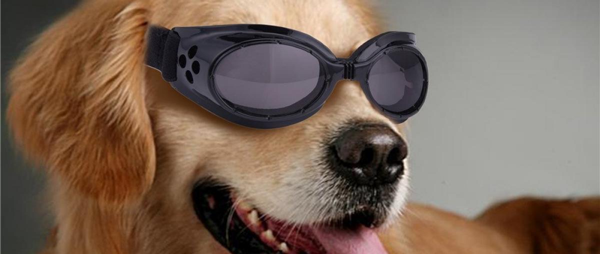 Hundebrille Vergleich