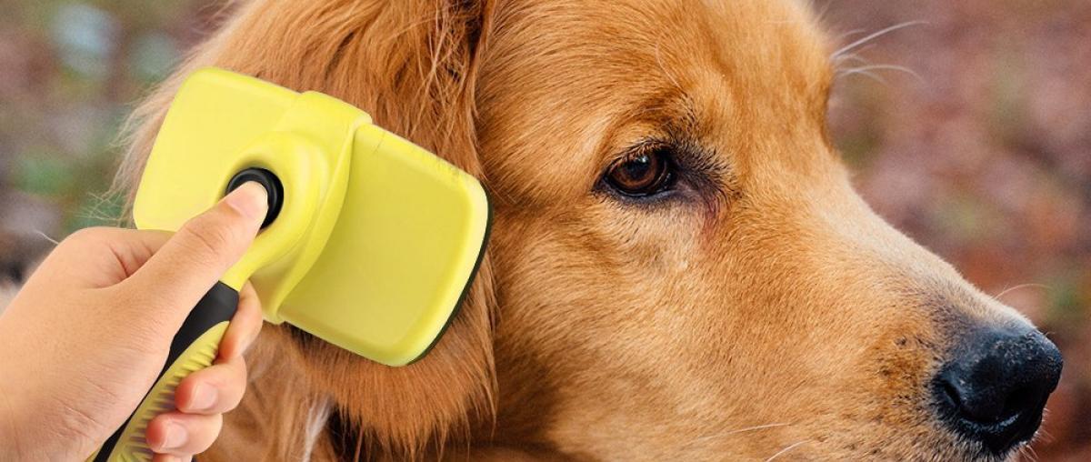 Hundebürste Ratgeber
