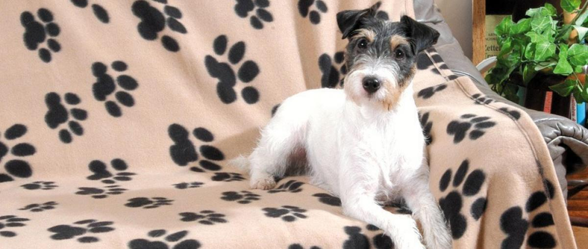 Hundedecke Vergleich und Tipps