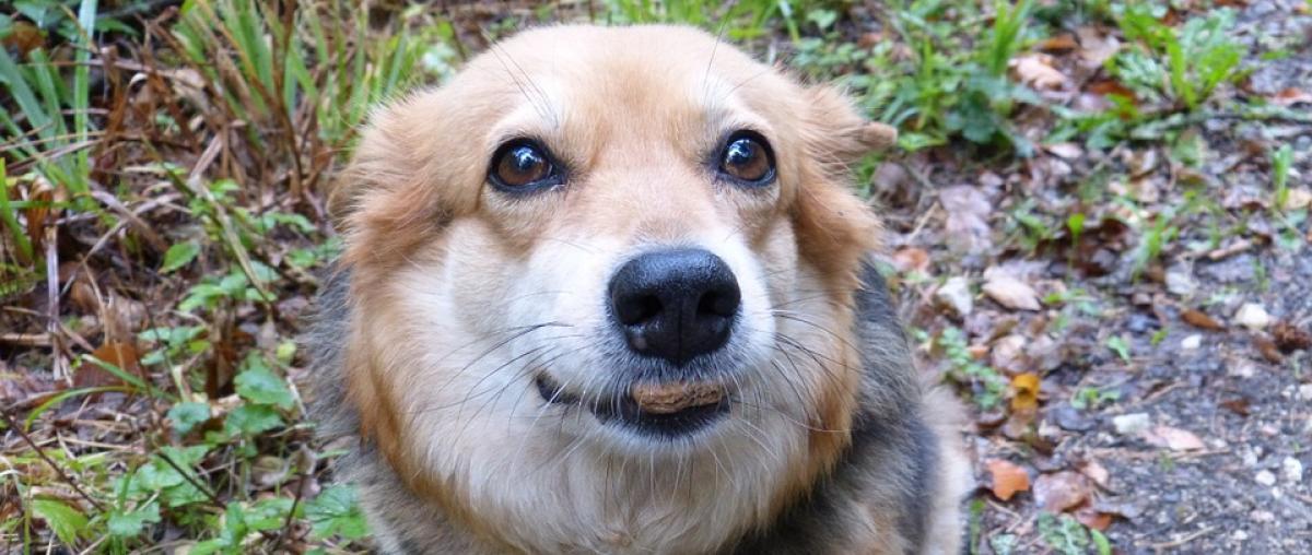 Hundekekse Vergleich