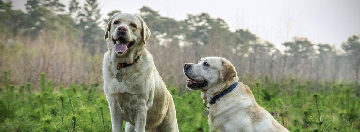 Hundemarke Vergleich
