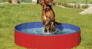 Hundepool Bestseller