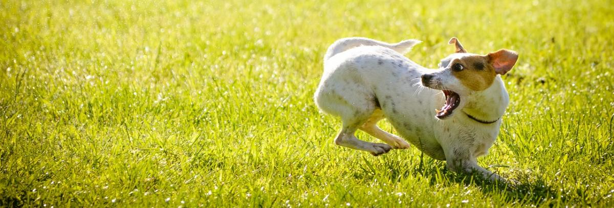 Hundetragebeutel Ratgeber
