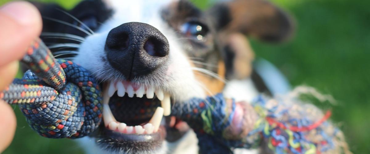 Hundezahnpasta Vergleich