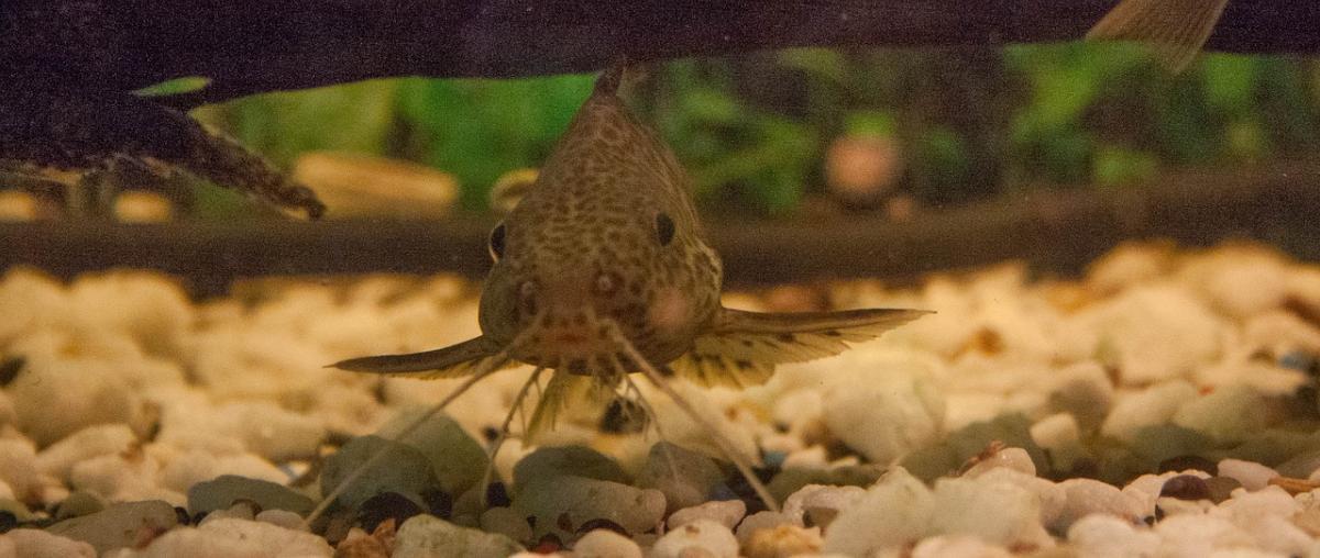 Juwel Aquarium Vergleich