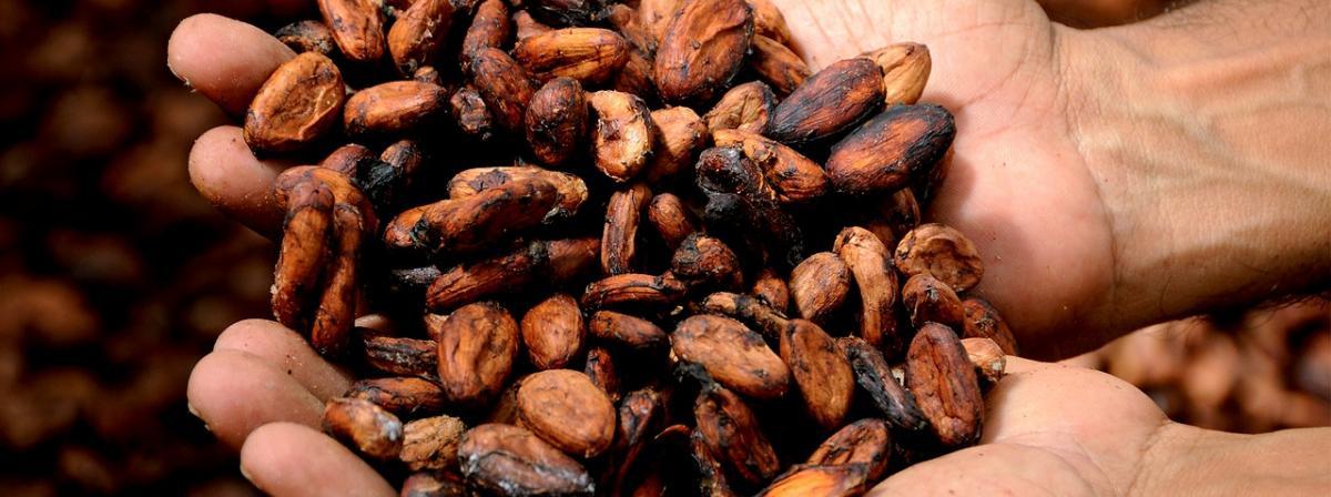 Kakaobohnen Vergleich