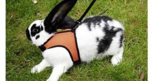 Kaninchengeschirr Bestseller