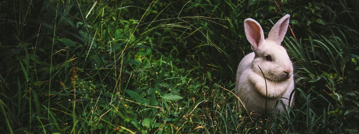 Kaninchenstall Vergleich