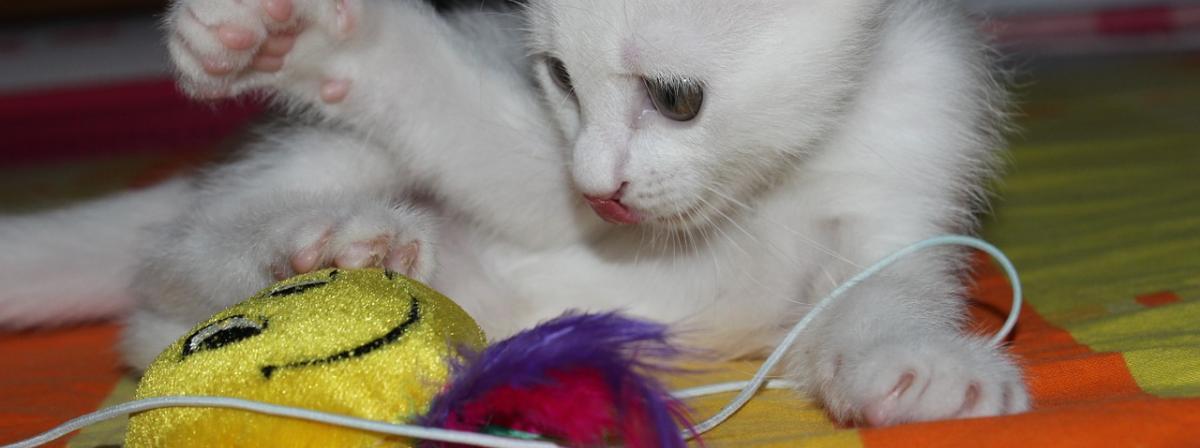 Katzen Federspielzeug Vergleich