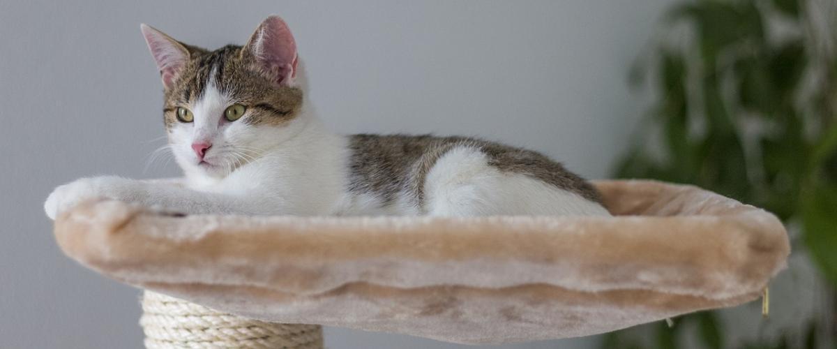 Katzen Fensterliege Ratgeber