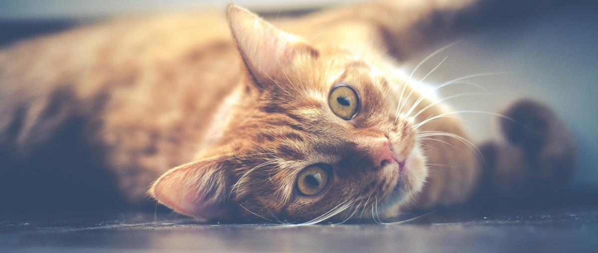 Katzen Futterautomat Vergleich