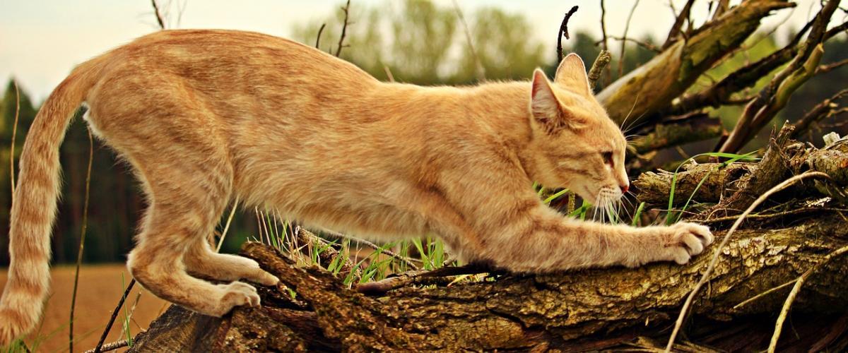 Katzen Kratzbrett Ratgeber