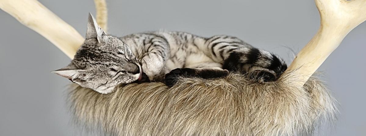 Katzen Kratzsäule Infos