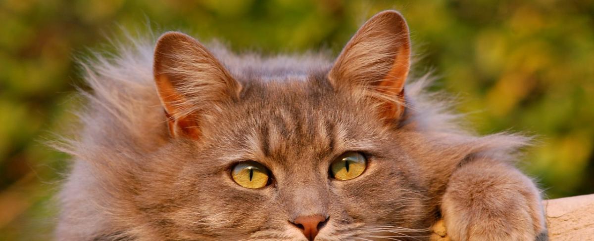 <span id='katzen-ohrenreiniger-ratgeber'>Katzen-Ohrenreiniger Ratgeber</span>