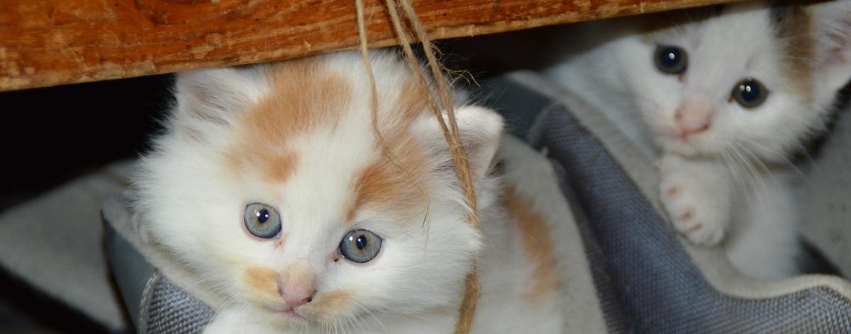 Katzen Tragetasche Ratgeber