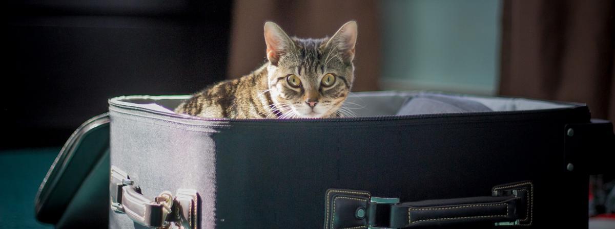 Katzen Transportbox Vergleich