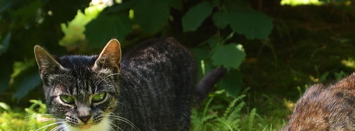Katzen Trinkbrunnen Vergleich