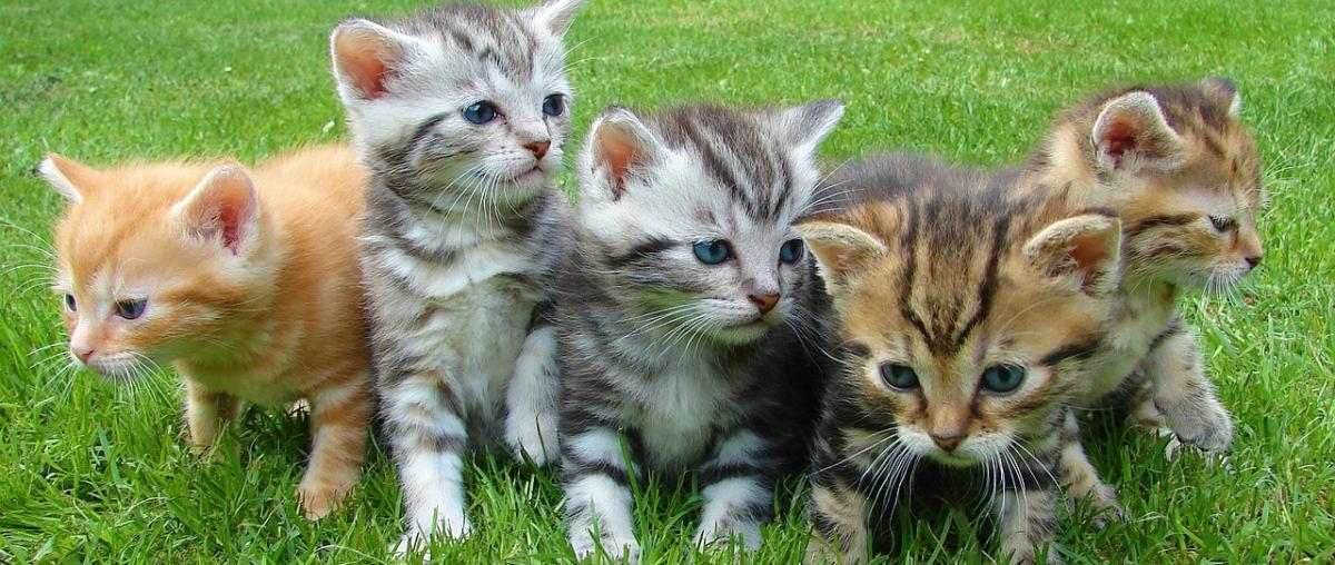 Katzen-Ungezieferschutz Ratgeber