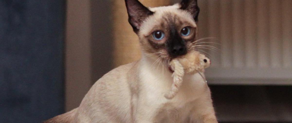 Katzenangel Wissenswertes