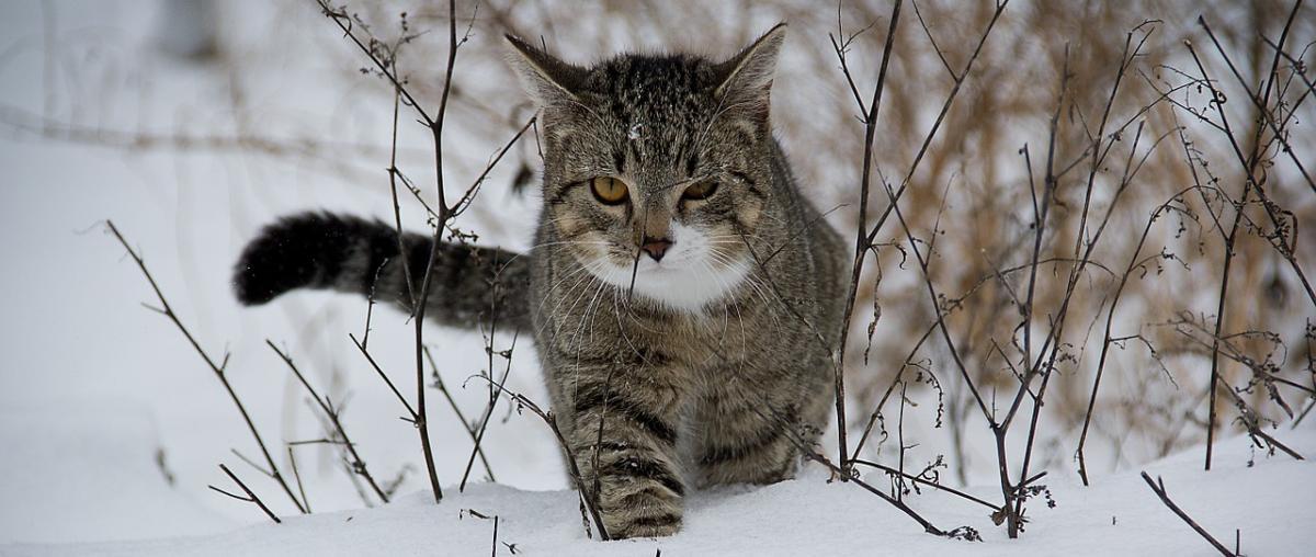 Katzenbürste Vergleich