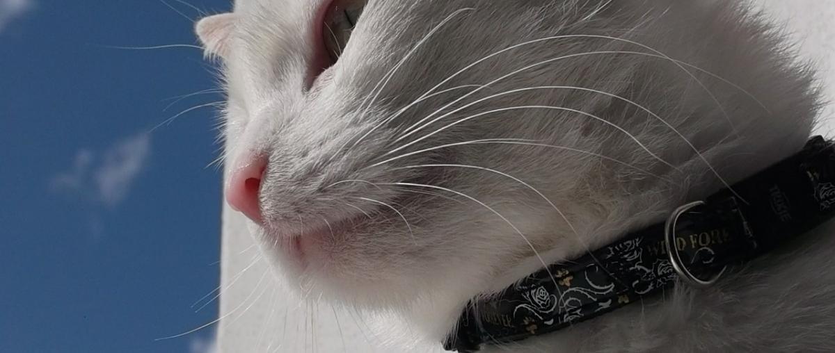 Katzenhalsband Vergleich