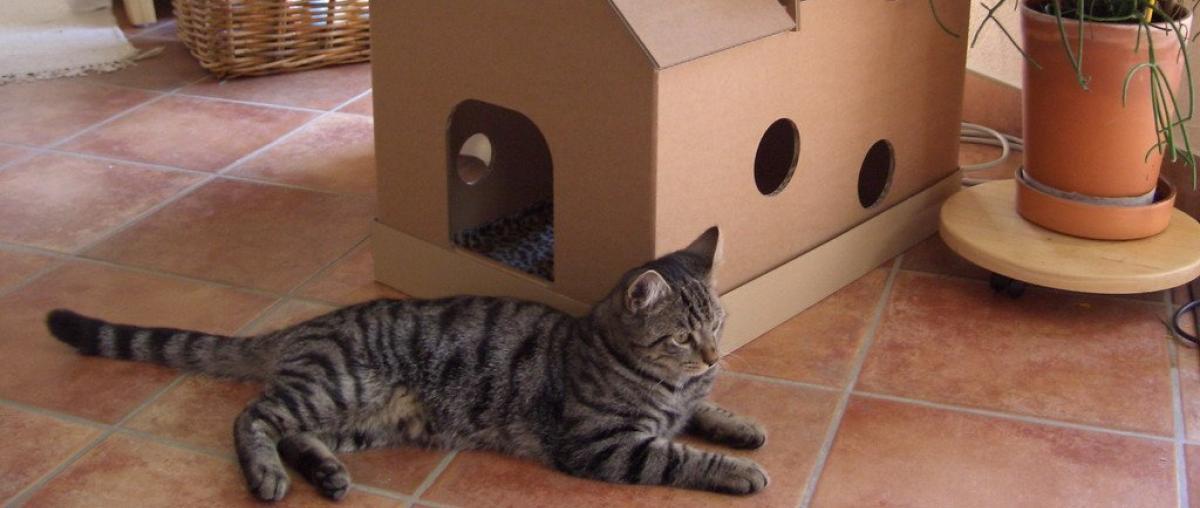 Katzenhaus Ratgeber