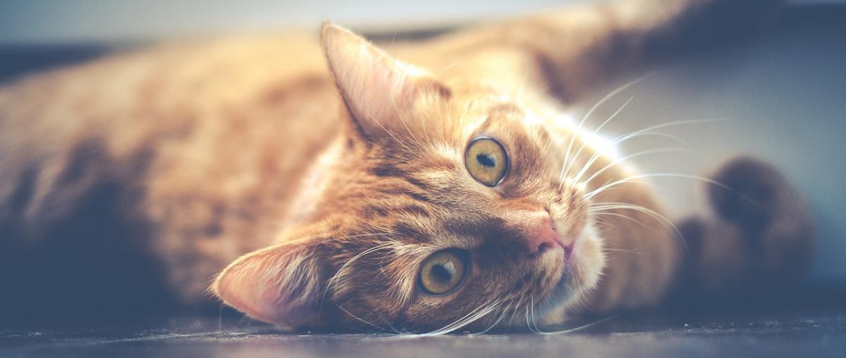 Katzenkorb Vergleich