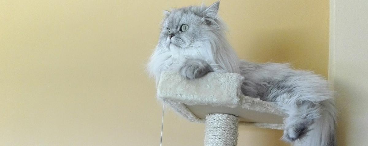 Katzenkratzbaum Vergleich