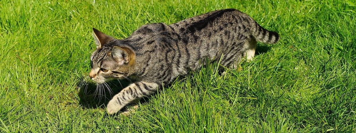 Katzenleine Vergleich